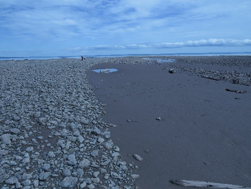 Muddy rivulets leading to sea at low tide, Alma, NB