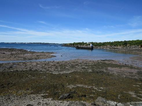 Campobello tides - low tide, Quoddy Head, Campobello Island, NB