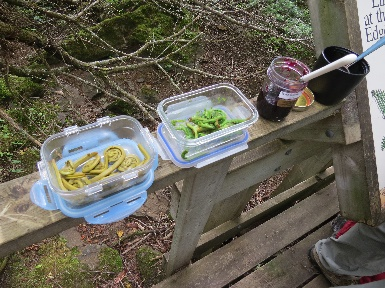 Pickled and steamed fiddleheads on Edible Foods walk, Fundy