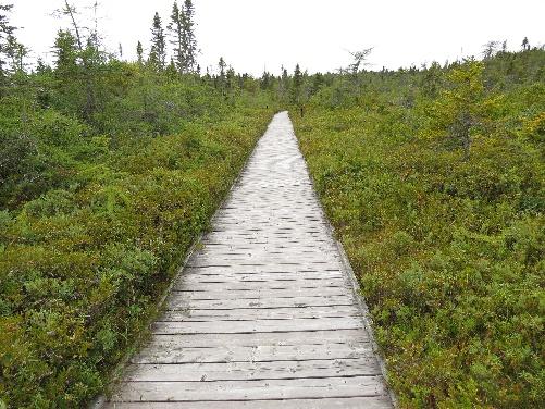 Bog boardwalk, Roosevelt Park, Campobello, NB