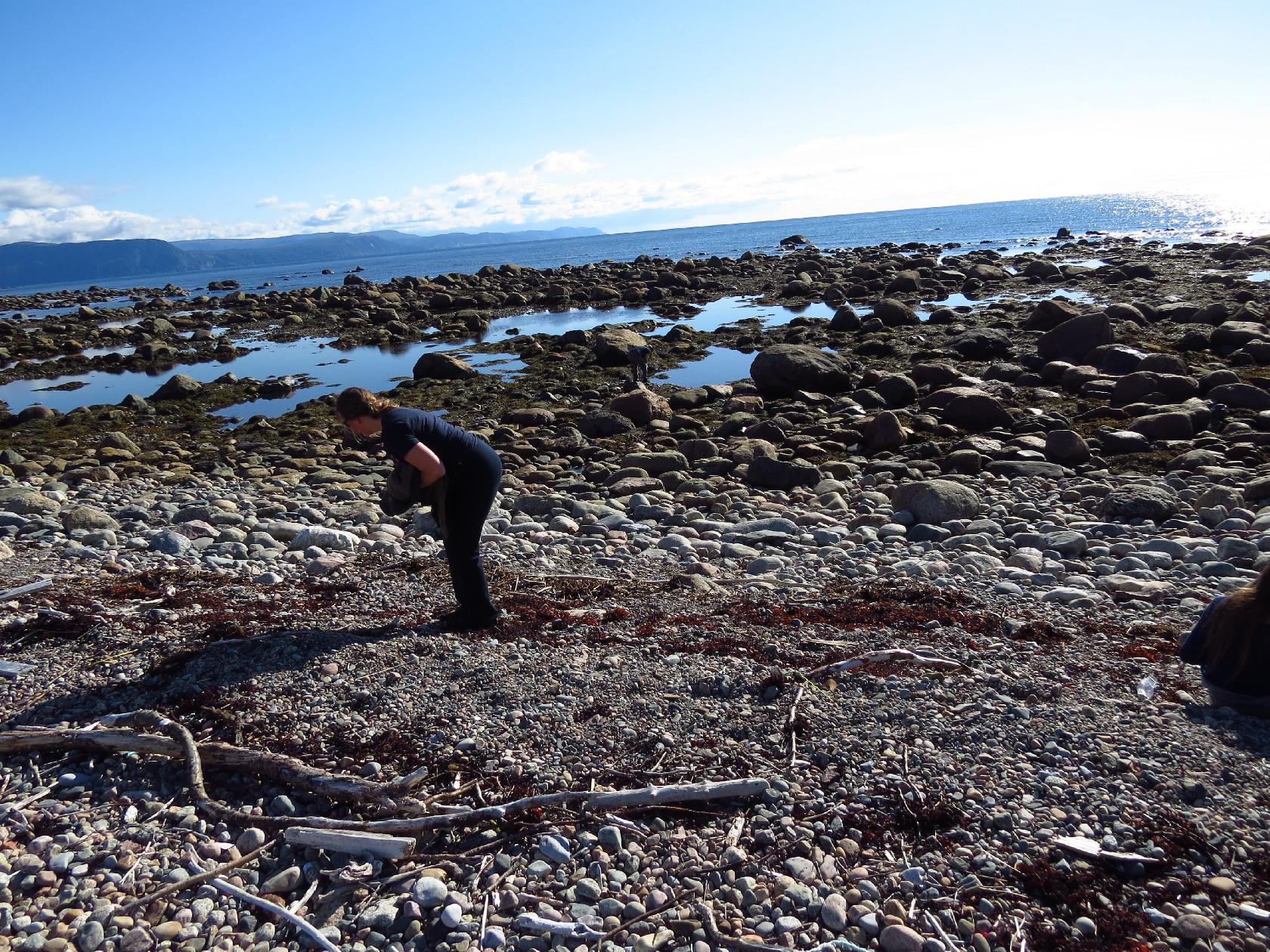 What does the sea bring? Coastal Walk, Gros Morne