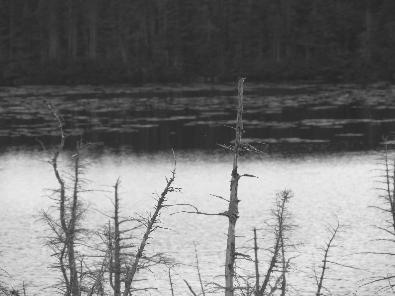 Berry Head Pond in black and white, Gros Morne, NL