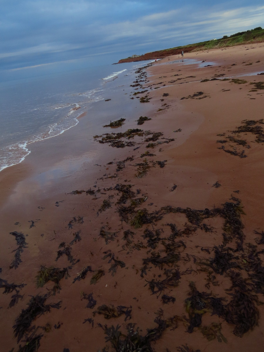 A view of beach, Campbell's Cove, PEI