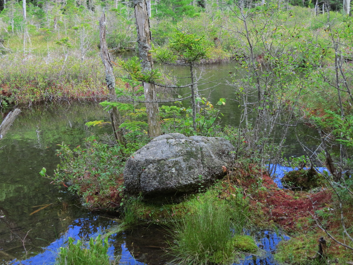 Paradise in Second Greeley Pond, NH