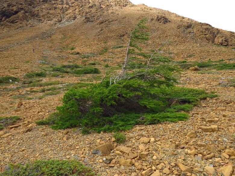 Tablelands vista with tree, Gros Morne NP