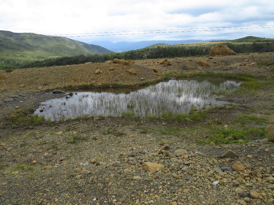 Tablelands pond with grasses, NL