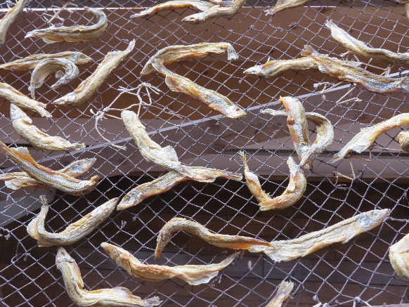 Dried fish outside fisheries museum, Trout River, Newfoundland