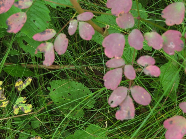Changing colors in the undergrowth, Codroy Estuary Nature Reserve, NL