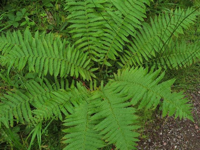 The heart of a fern, Codroy Estuary Nature Reserve,, NL