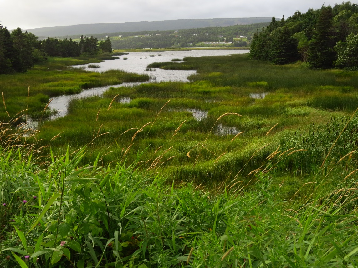View of marsh and river, Codroy Estuary Nature Reserve