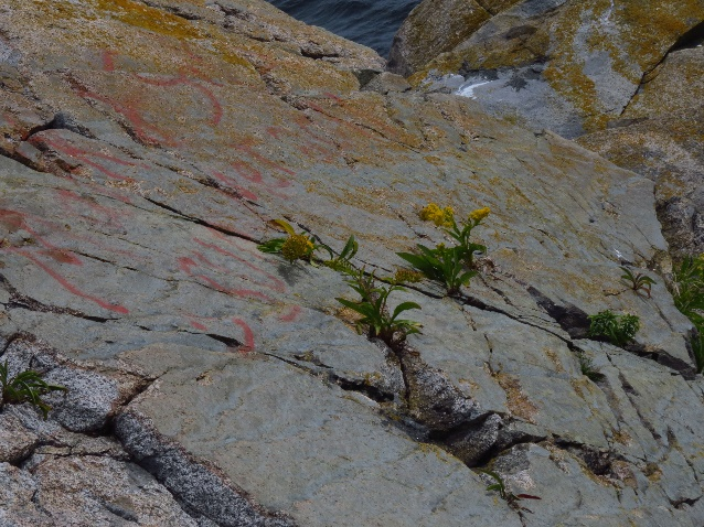 Life in the rocks, Middle Head Peninsula, Cape Breton