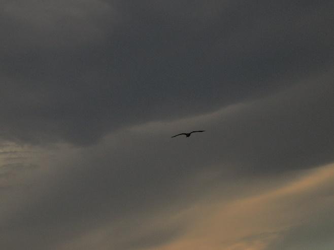 Against a darkening sky, Neil's harbor, Cape Breton