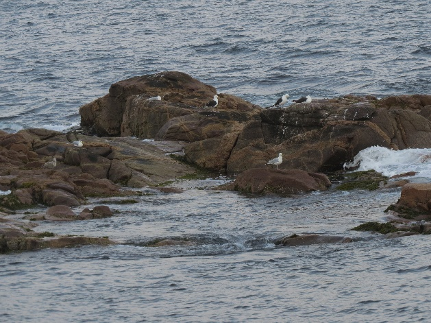 On the rocks, Neil's Harbor, Cape Breton's east coast