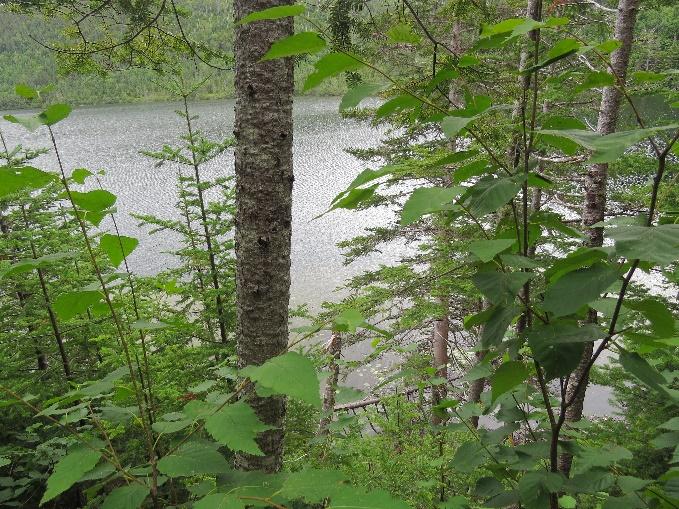 Spirity Pond as viewed through the trees on the bank, Gros Morne KOA, NL