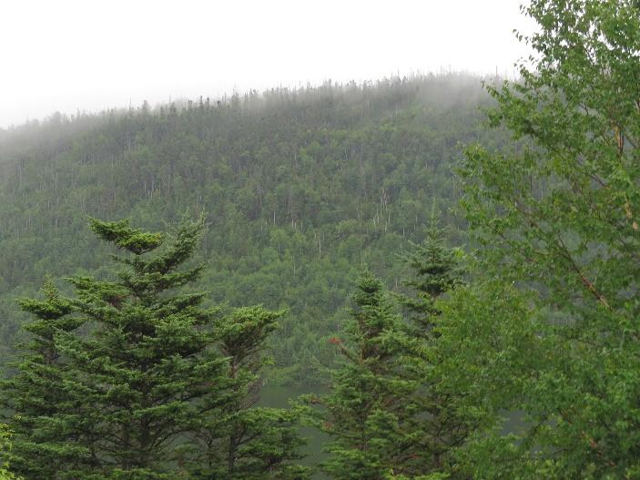 NL virgin forest on far side of Spirity Pond, view from Gros Morne KOA