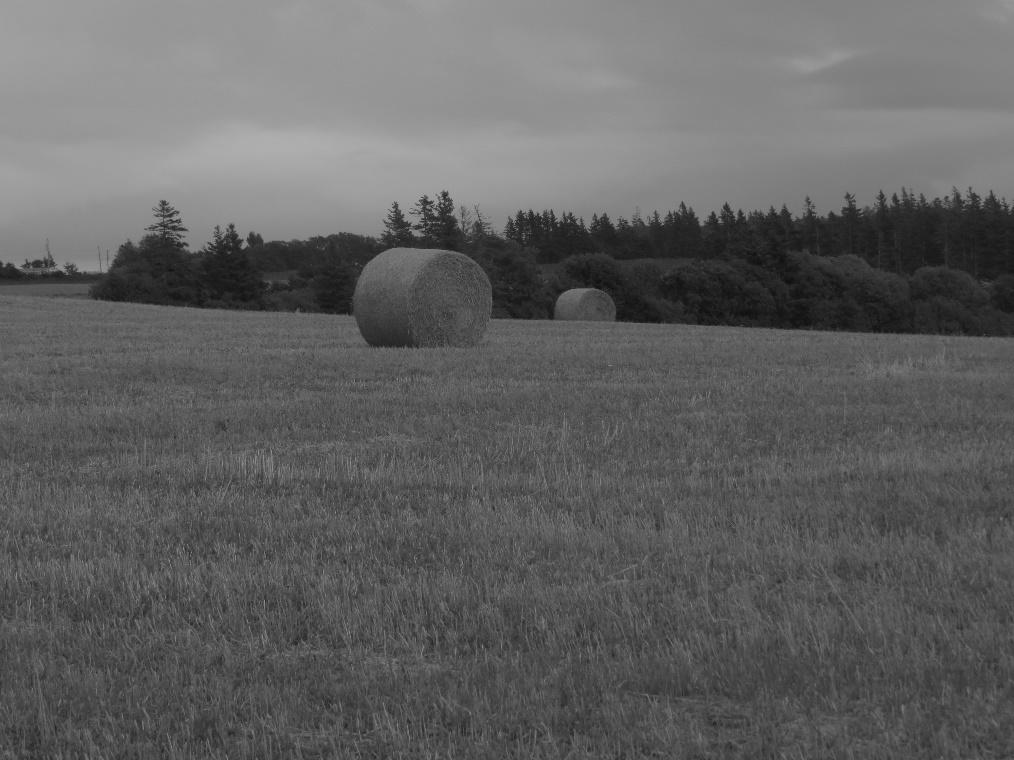It is still farmland, Cavendish