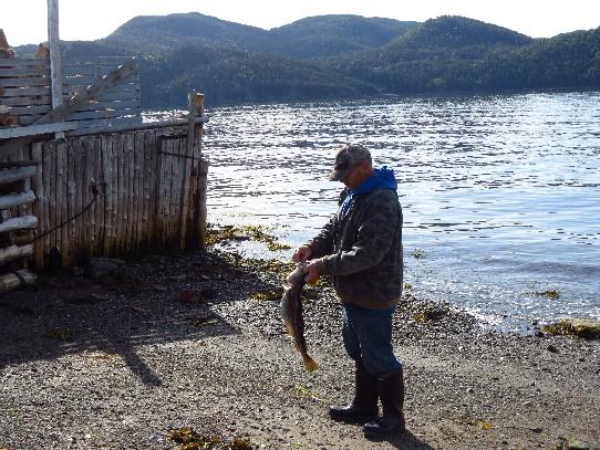 Fisherman, Woody Point, NL