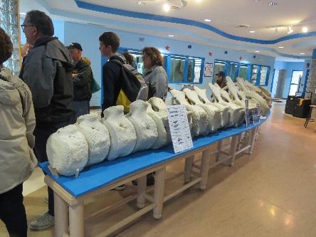 Whale vertebrae, Bonne Bay Marine Lab, NL