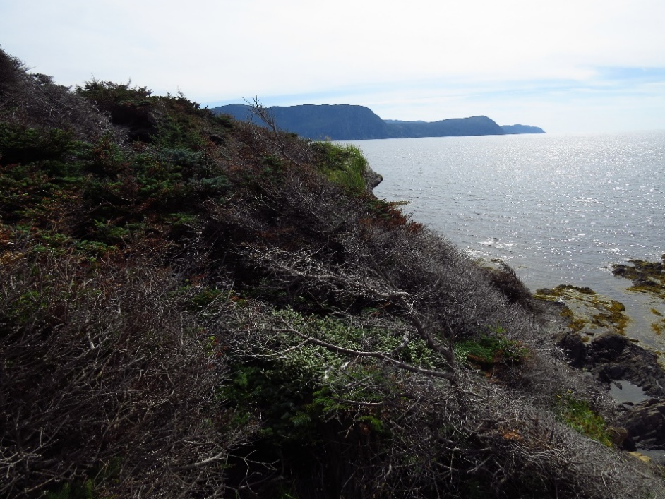 Views around Lobster Cove Lighthouse