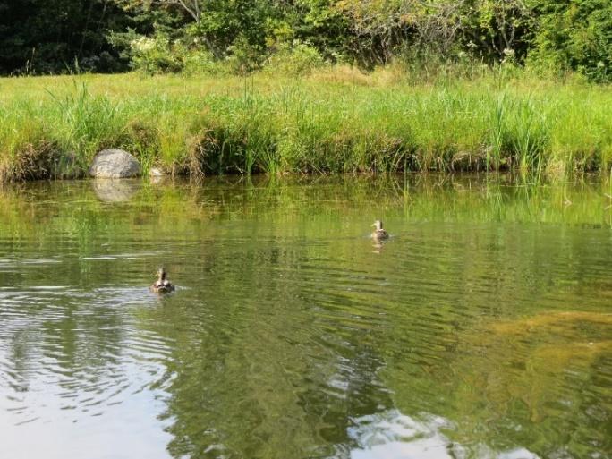 Duck Pond, NE Hrabor, Mount Desert Island