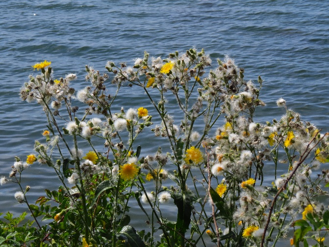 By the water side, Seal Cove, Mount Desert Island, ME