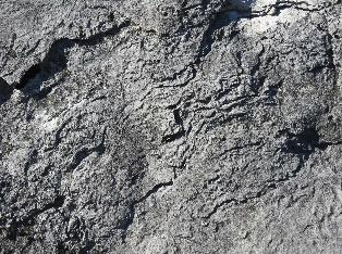Fossilized Stromatoporoid, Isle La Motte, VT