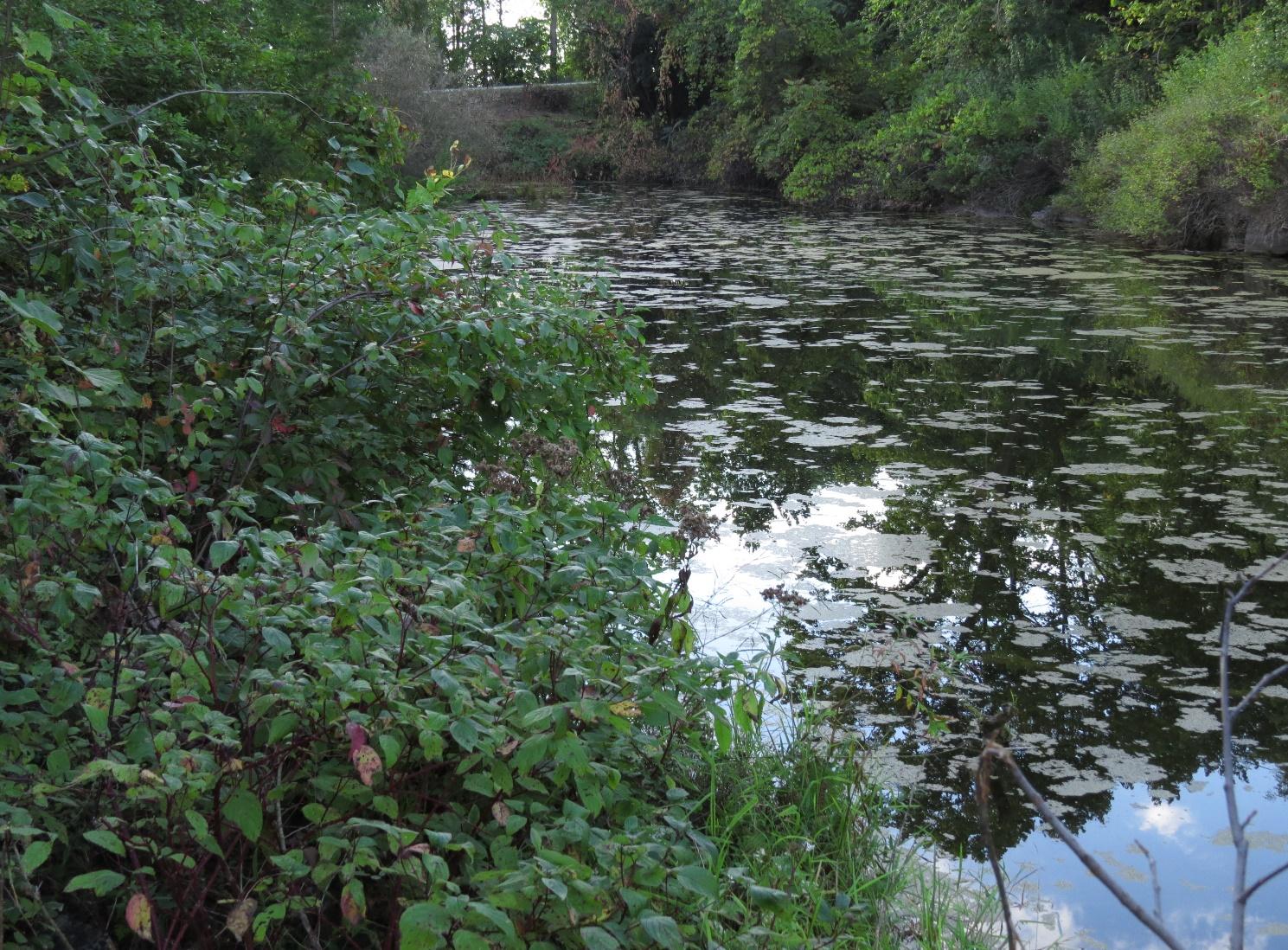 Pond, Fisk Quarry Preserve, La Motte, VT