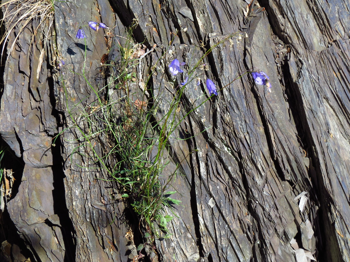 Flowers growing on top of dead tree, Chemin du Nord, Parc National du Bic, Quebec