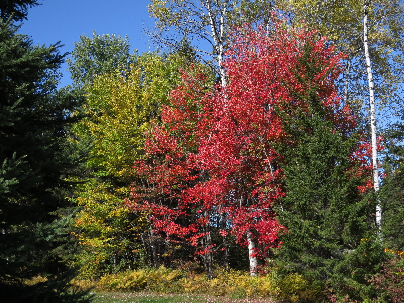 Forest changing colors, NB, Canada