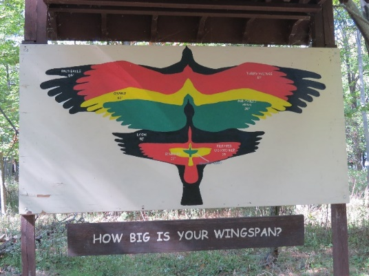 Comparative wing spans, Wellesley Island Nature Center, NYS