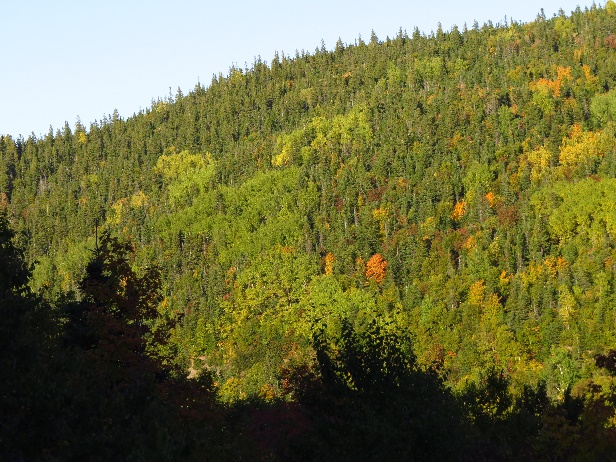 Forests changing colors, Route 132, Gaspe Peninsula, QC