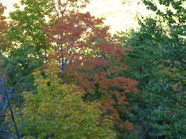 Colors changing along Route 132, Gaspe Peninsula, QC
