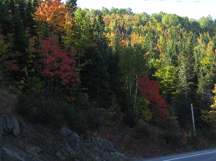 Colors changing on way to Forillon National Park, QC