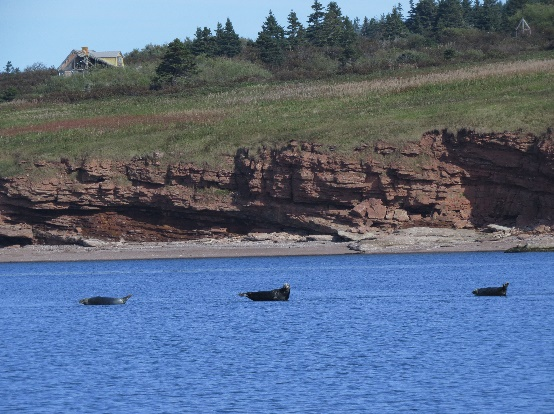 Seals at bottom, humans on top, Bonaventure Island Boat Tour, Gaspe Peninsuald, QC