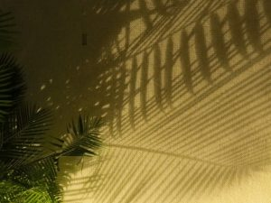 Palm frond shadow, Eilat hotel area