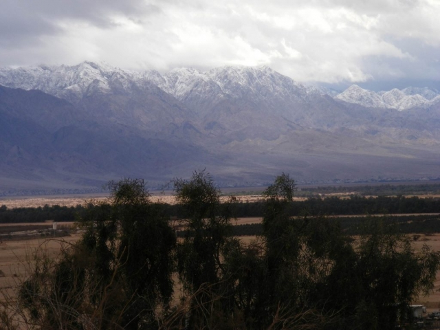Arava Trees against snowy Edom mountains