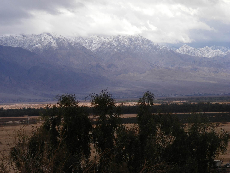 Arava Trees against snowy Edom mountains