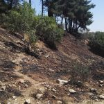 Burned patch of Wadi Hayoverl, Jerusalem