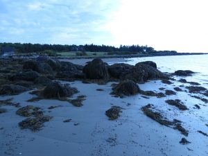 Low tide, Atlantic coast by Lobster Buoy CG, ME