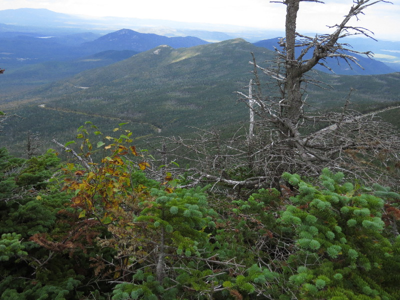 Trees struggling higher up Mount. Whiteface, NYS