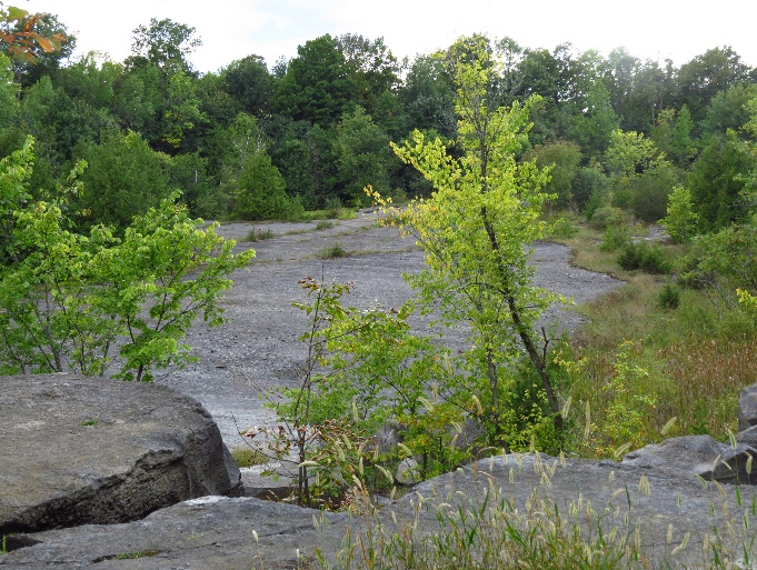 Full ecological system formed on bedrock, Fisk Quarry Preserve, La Motte, VT