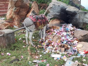 Garbage and donkey behind Savitri Temple, Pushkar, Rajasthan