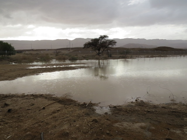 Ancient lake restored by flash floods. Southern Arava. Nov 2013.