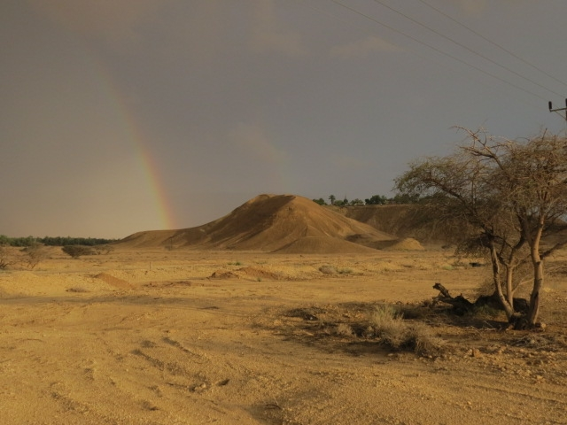 Tree, hill, double rainbow. Grofit hills. August 2014. Arava.