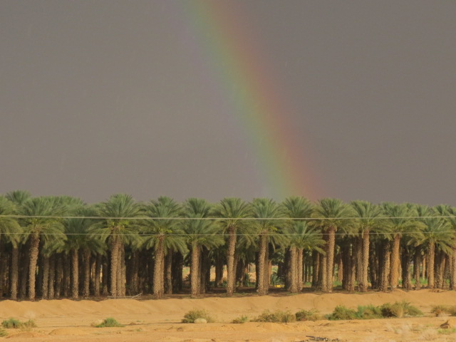 Ktura's palm orchards with rainbow. Aug, 2014. Arava