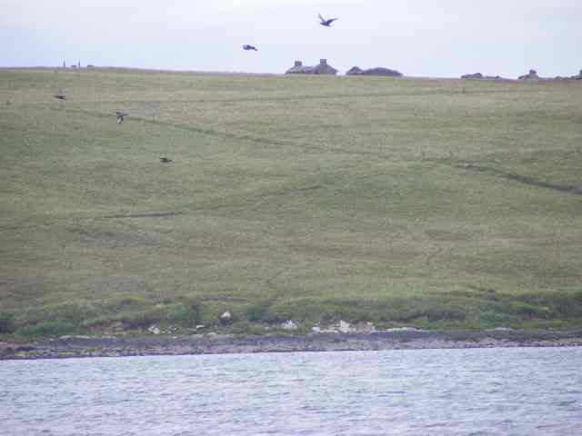 Irreversible ecological damage? Treeless Orkney landscape with sea and grass.