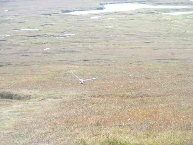 Treeless Shetlands landscape with bog
