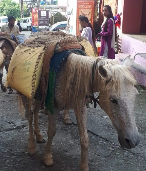 The poor donkeys carrying construction materials up Bhagsu's main road