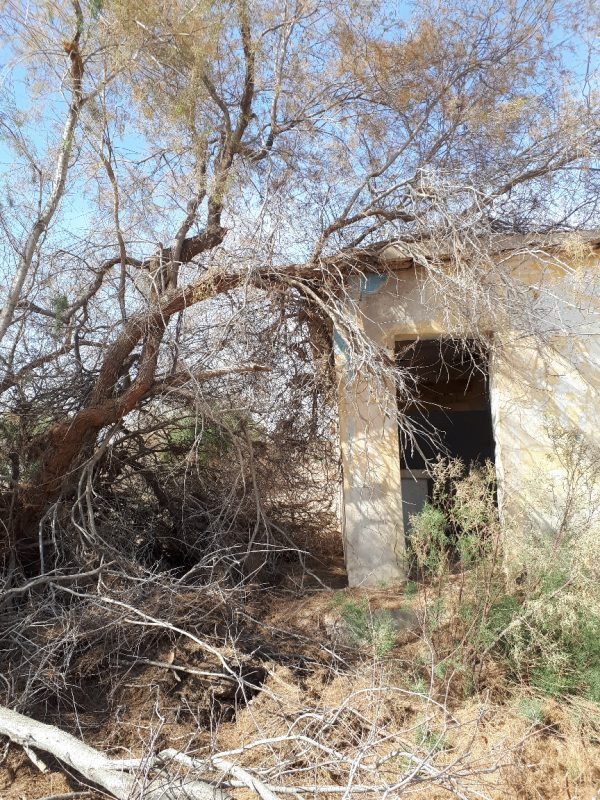 Abandoned military structure with desert tree. kalya