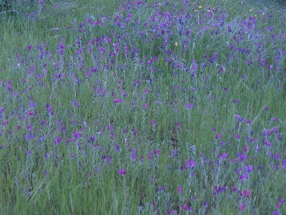 Perennials - Jordan Valley